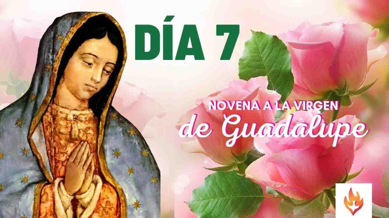 septimo dia novena virgen de guadalupe
